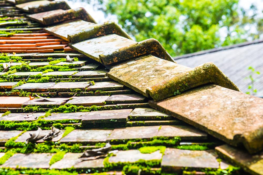 astuces démoussage toiture